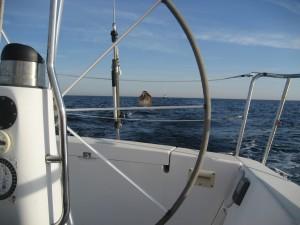 Guest Navigator