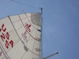 Little bird hanging from the halyard